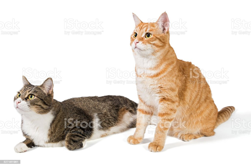 Two friendly cat stock photo