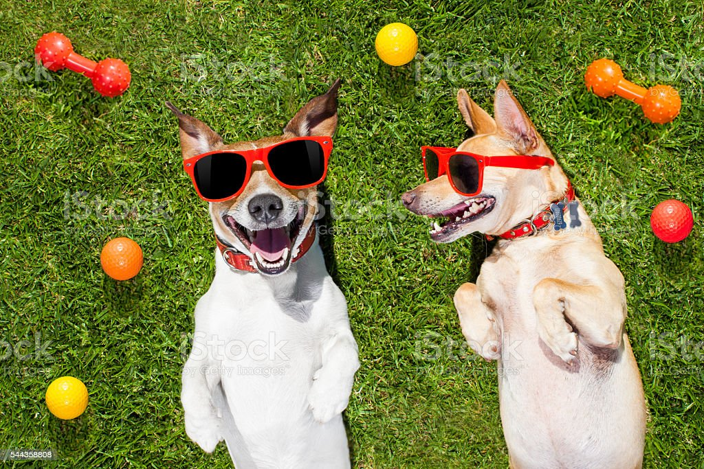 two funny playing dogs stock photo