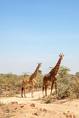 Two giraffes at a dirt road in Africa