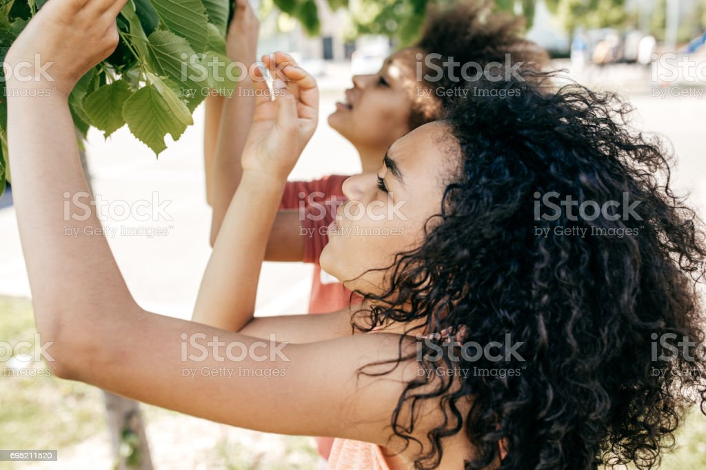 Two girl  discovering leaf structure stock photo