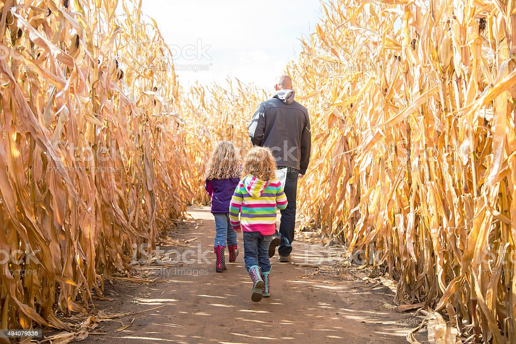 Two Girls & Dad Walking Through Autumn Corn Maze stock photo