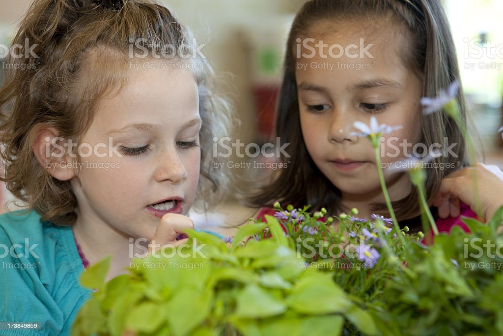 Two girls having biology about the growing of plants royalty-free stock photo