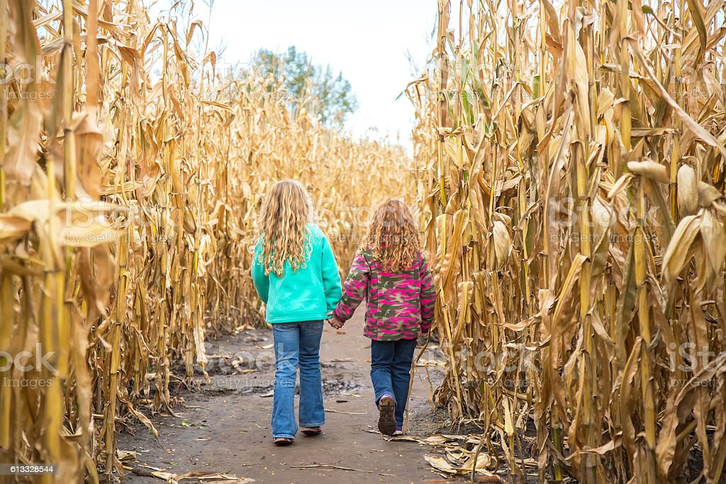 Two Girls Walking Through Corn Maze in Autumn stock photo
