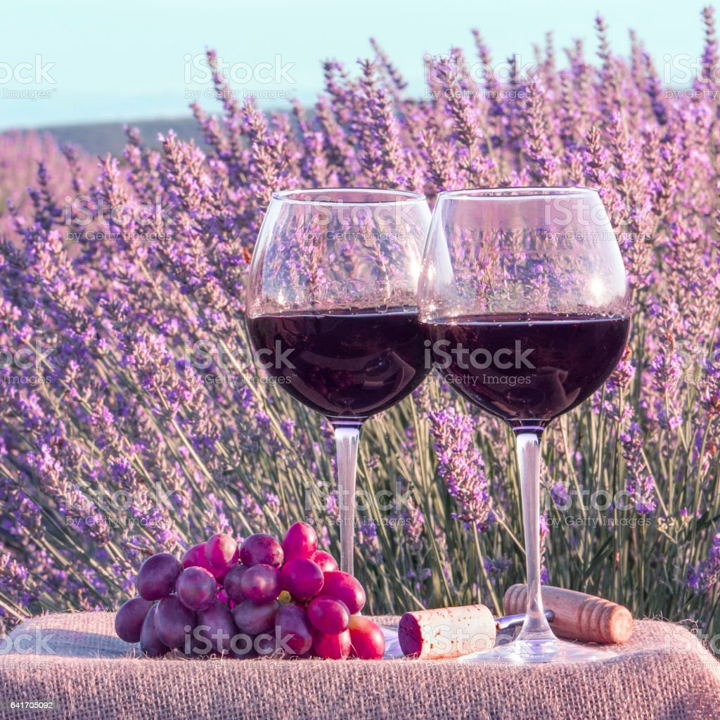 Two glasses of red wine and grapes in lavender field stock photo