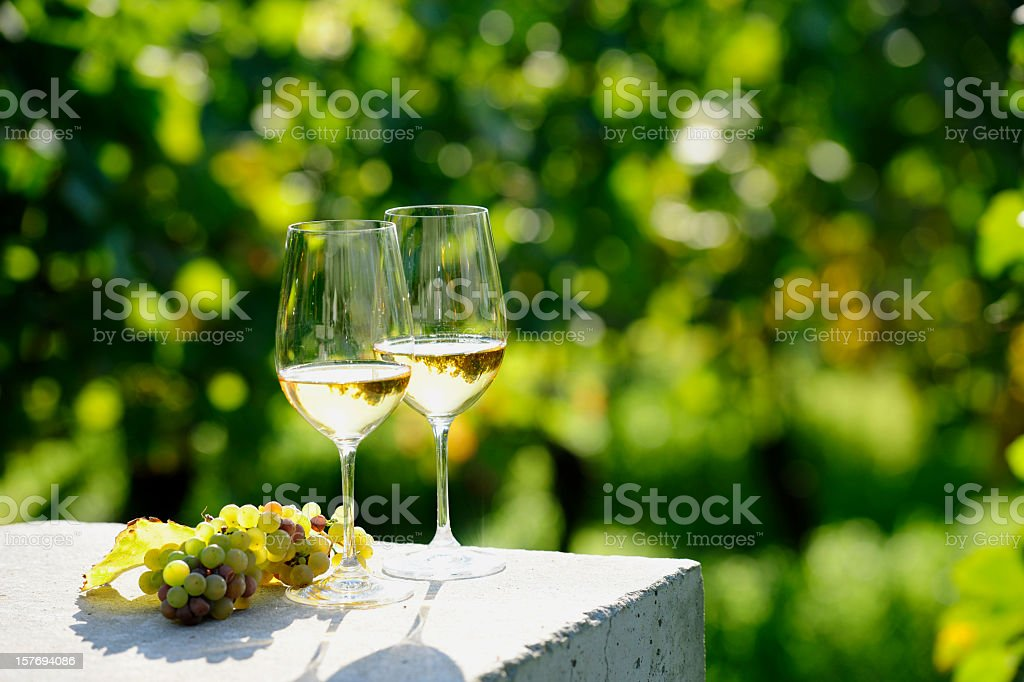 Two glasses of white wine (Risling) in vineyard stock photo