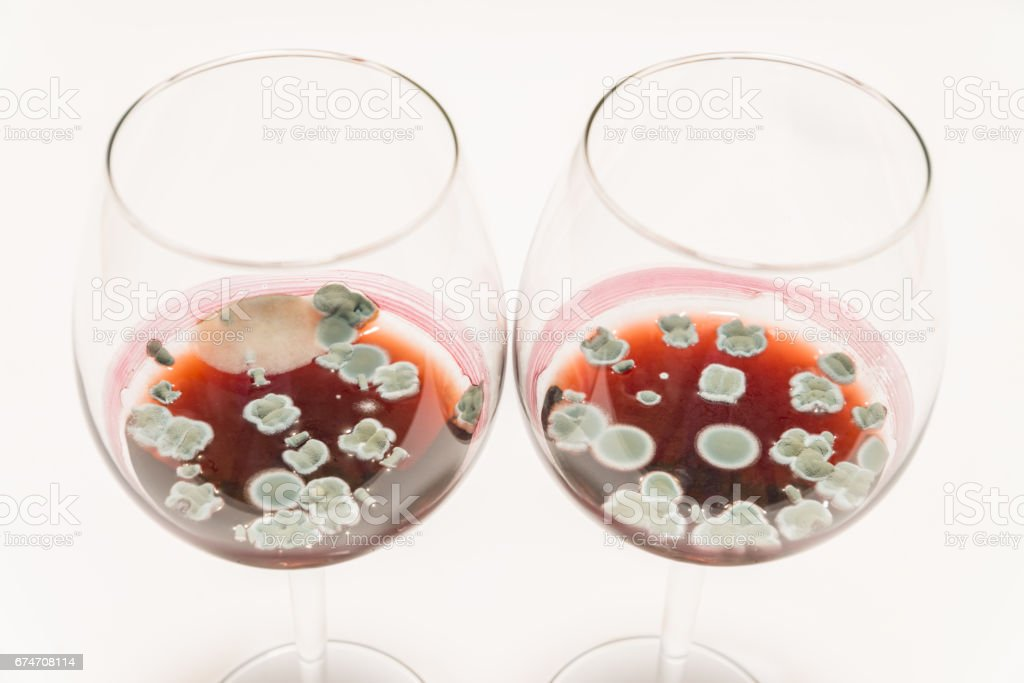 Two glasses with moldy red wine on white table stock photo