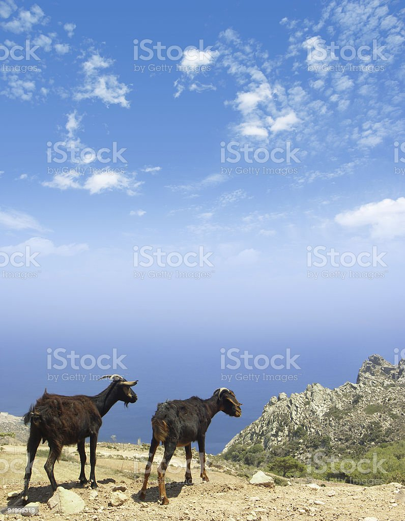 two goats on the hill - XL stock photo