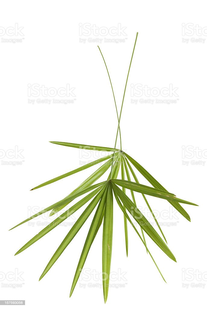 Two green bamboo leaf isolated on white with clipping path royalty-free stock photo