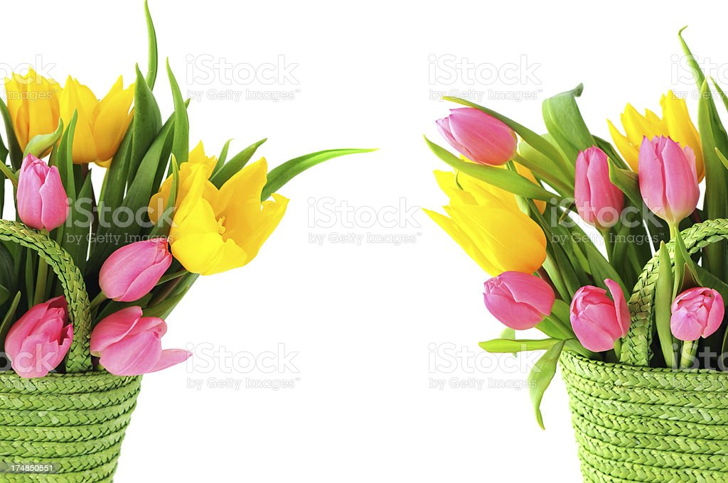 two green baskets with tulips and copyspace in middle stock photo