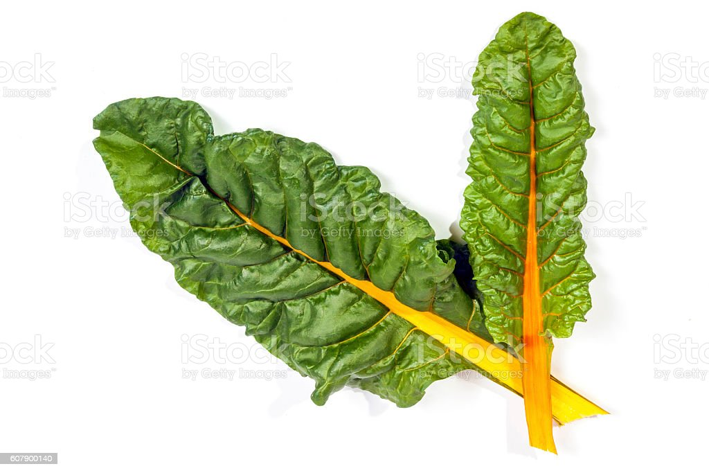 Two Green Leaves of Swiss Chard  With Yellow Stem stock photo