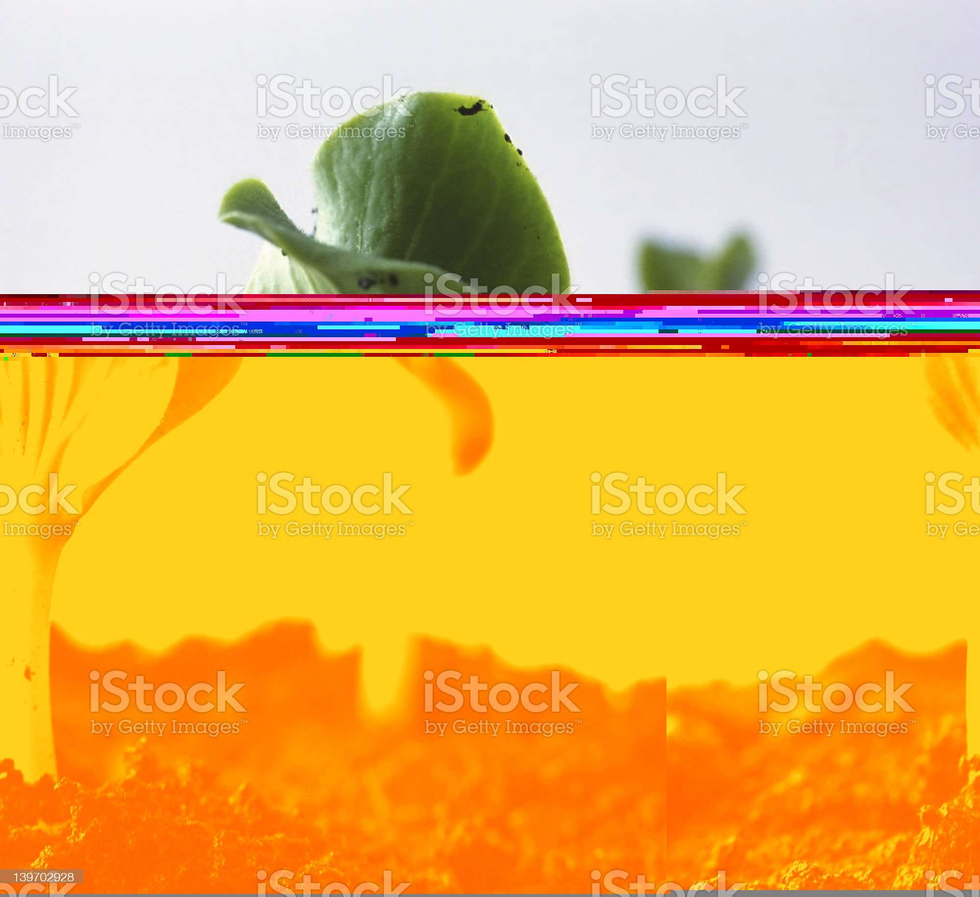 Two green sprout, Environmental Conservation royalty-free stock photo