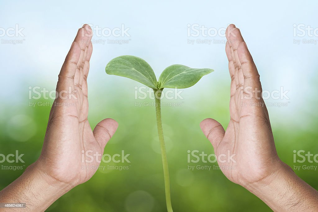 Two hand holding young plant stock photo