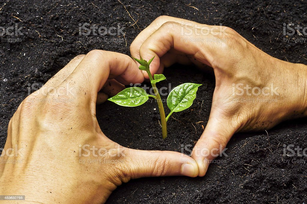 two hands forming heart shape around a young plant stock photo