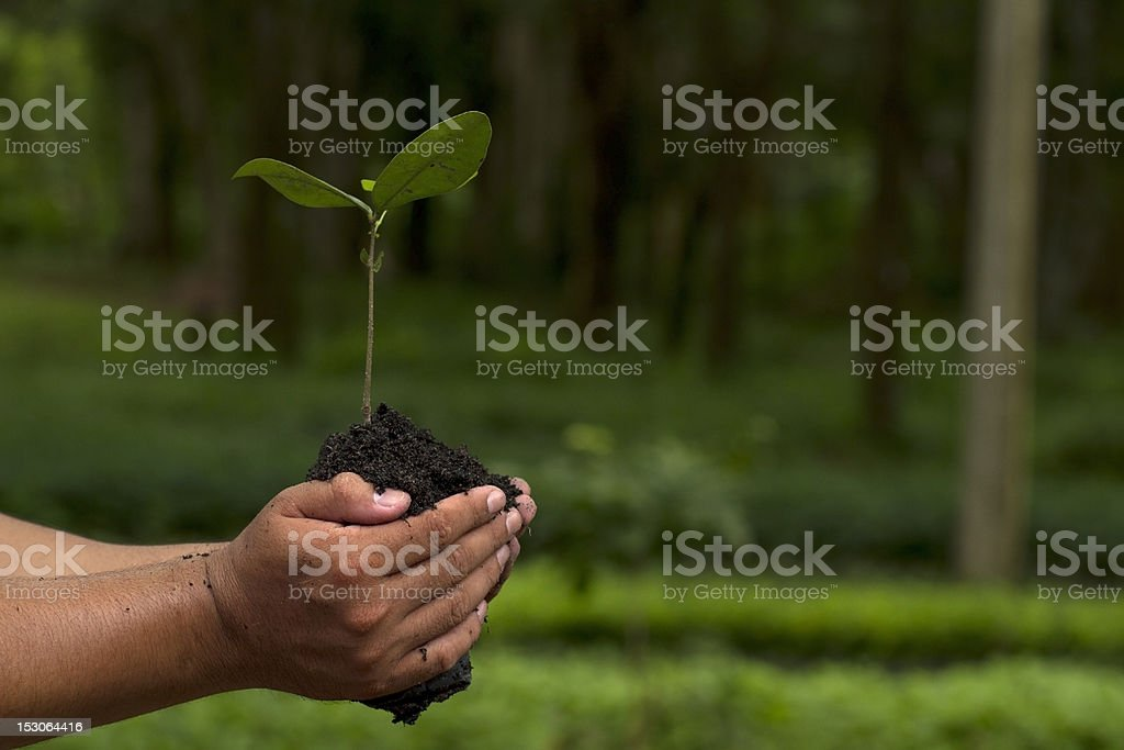 Two hands holding a small plant and soil in the woods stock photo