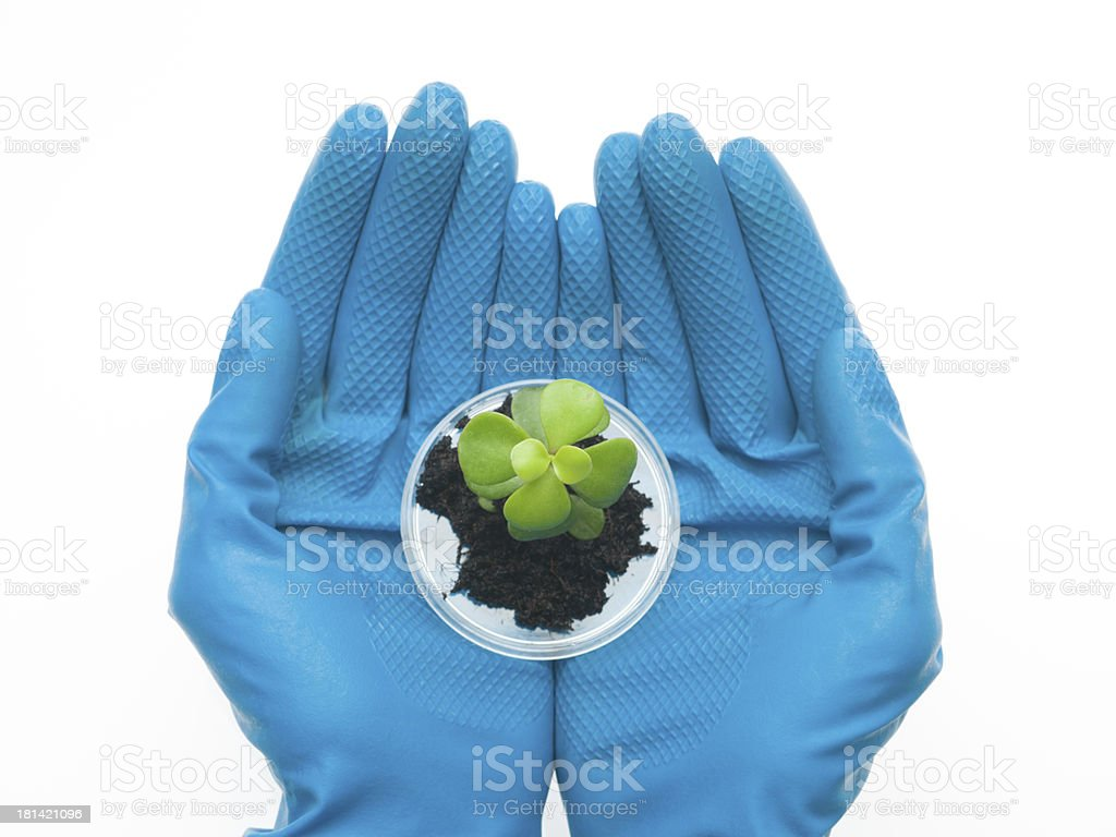 two hands holding a small sprout royalty-free stock photo