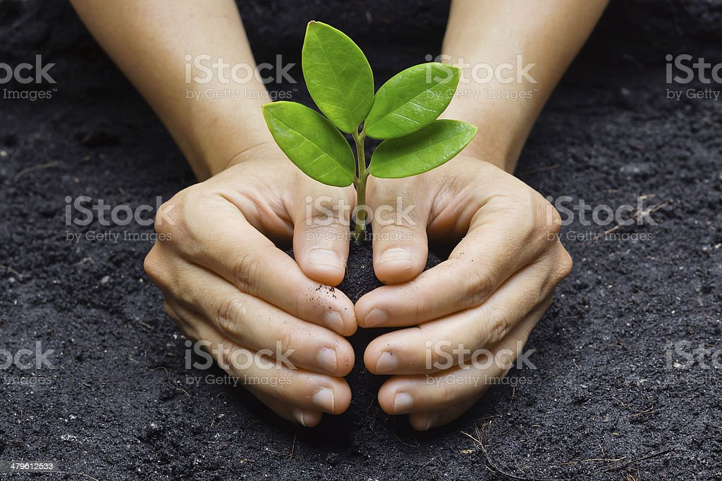 two hands holding and caring  young green plant stock photo