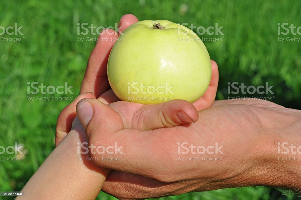 two hands kepping an apple stock photo