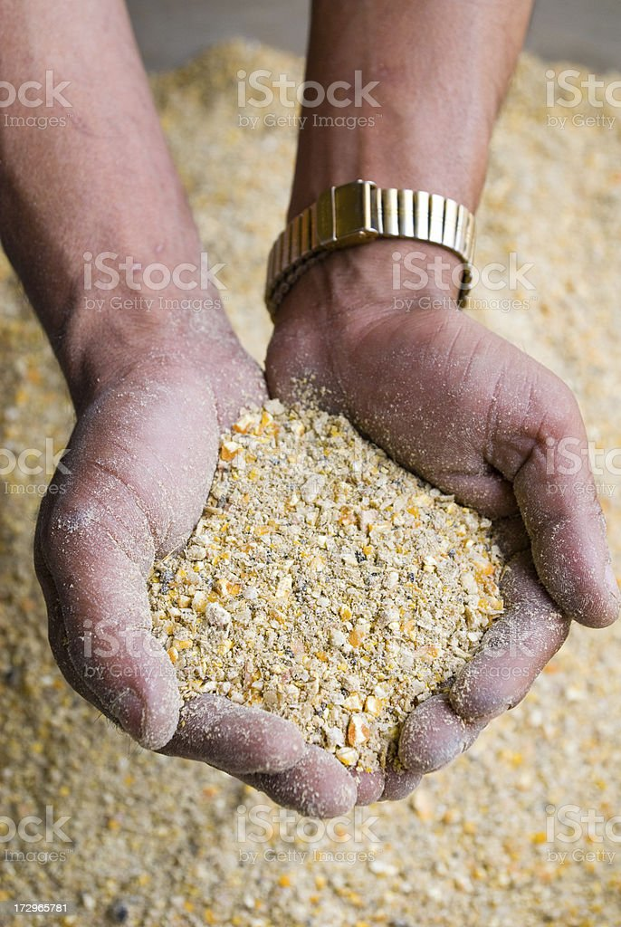 Two hands scooping up animal feed royalty-free stock photo