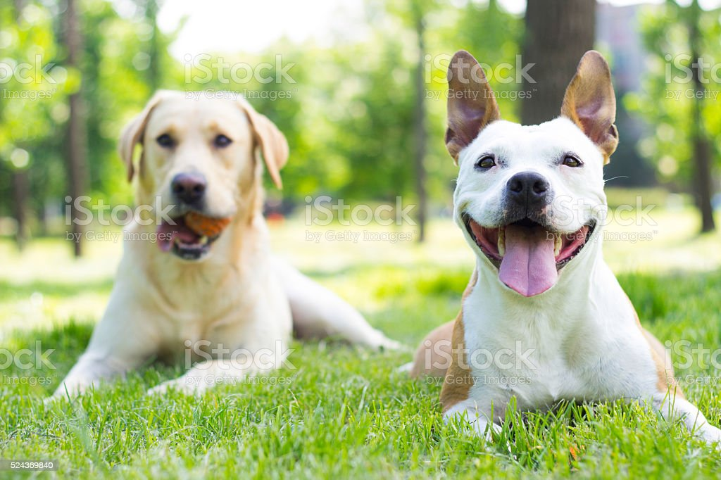 Two happy buddies stock photo
