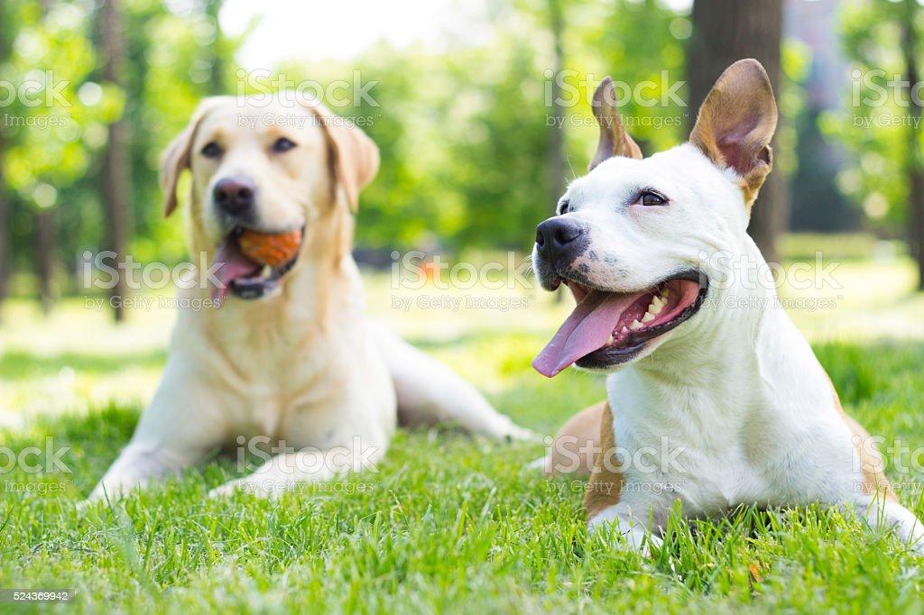Two happy buddies stock photo