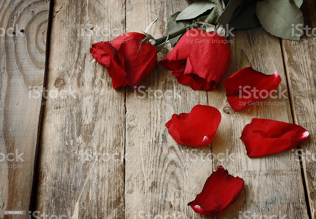 Two have wilted red roses stock photo
