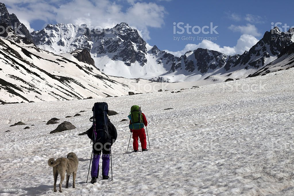 Two hikers with dog in spring snowy mountains stock photo