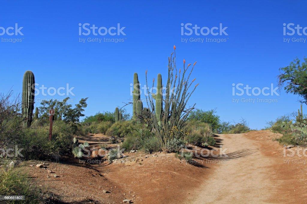 Two Hiking Trails in Bear Canyon, Tucson, AZ stock photo