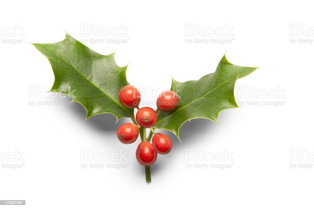 Two holy leaves with red berries on white background stock photo