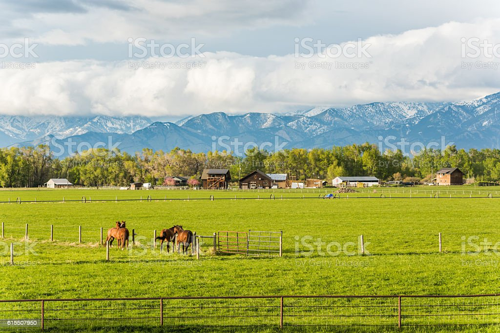 Two horse couples interacting in rural farm stock photo