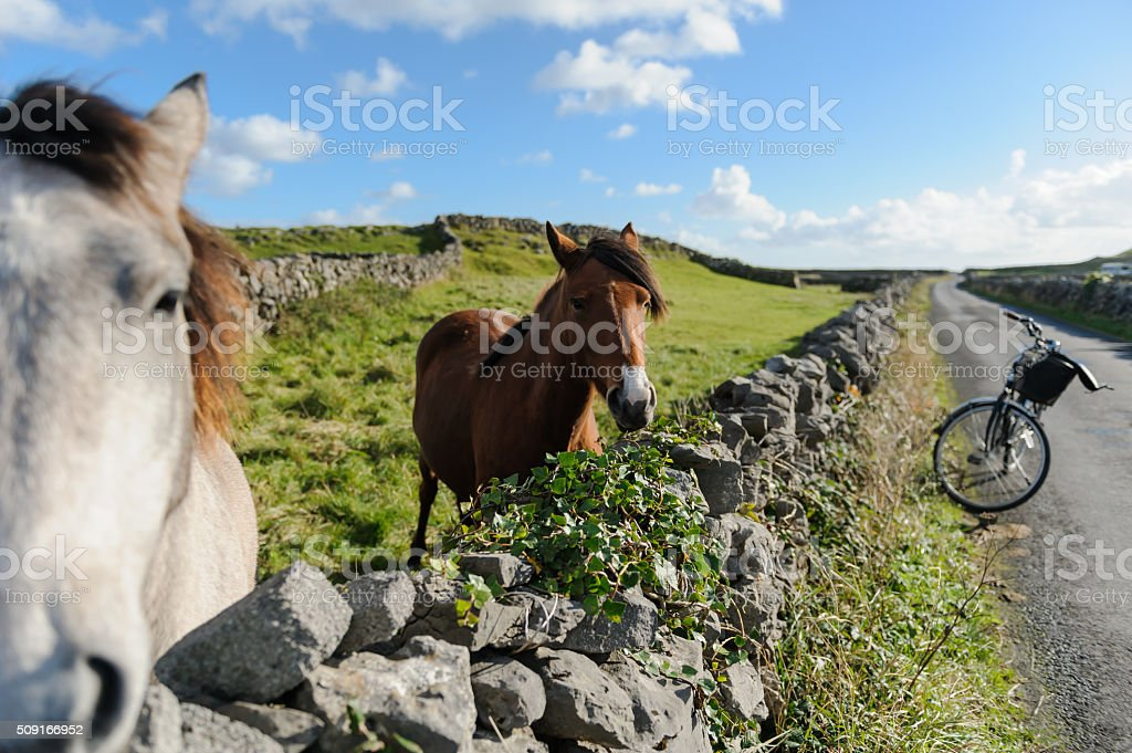 Two horses and a bike in the middle of nowhere stock photo