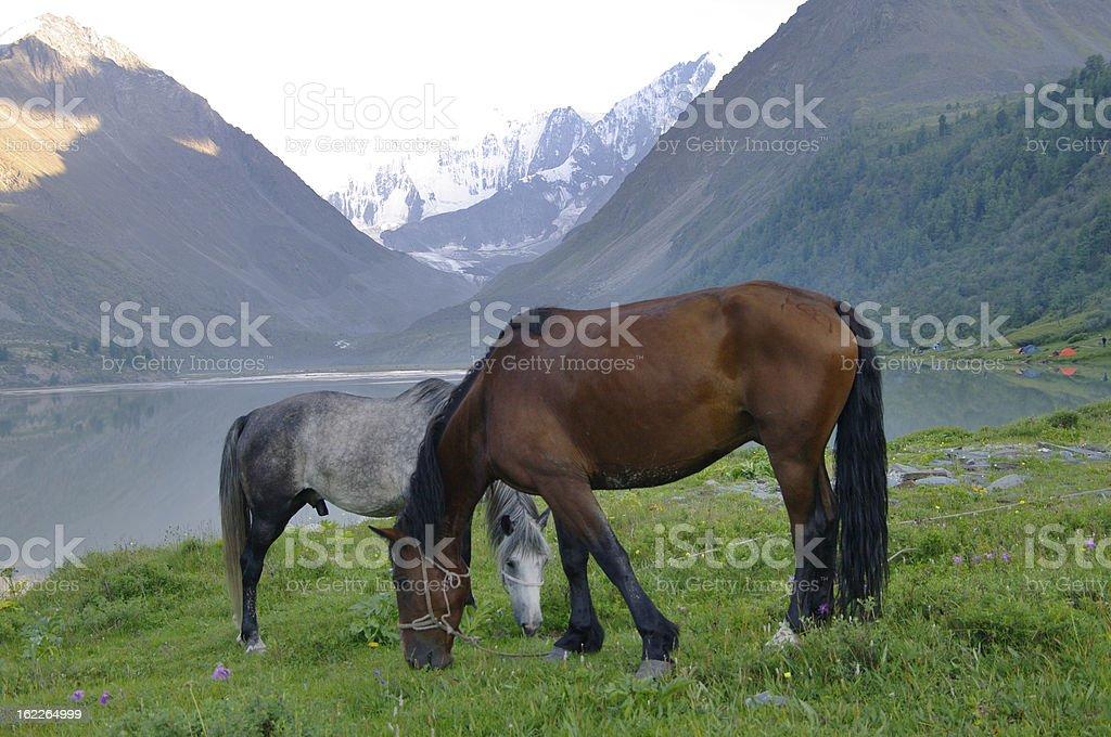 Two Horses at lake Ak-kem. stock photo