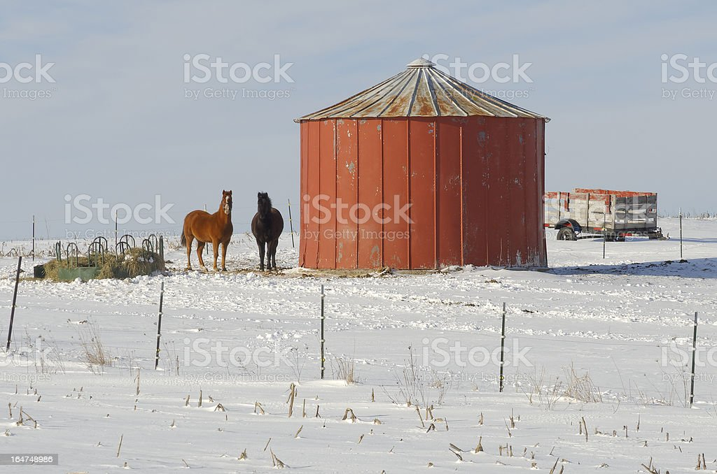 Two Horses By Silo in the Snow royalty-free stock photo