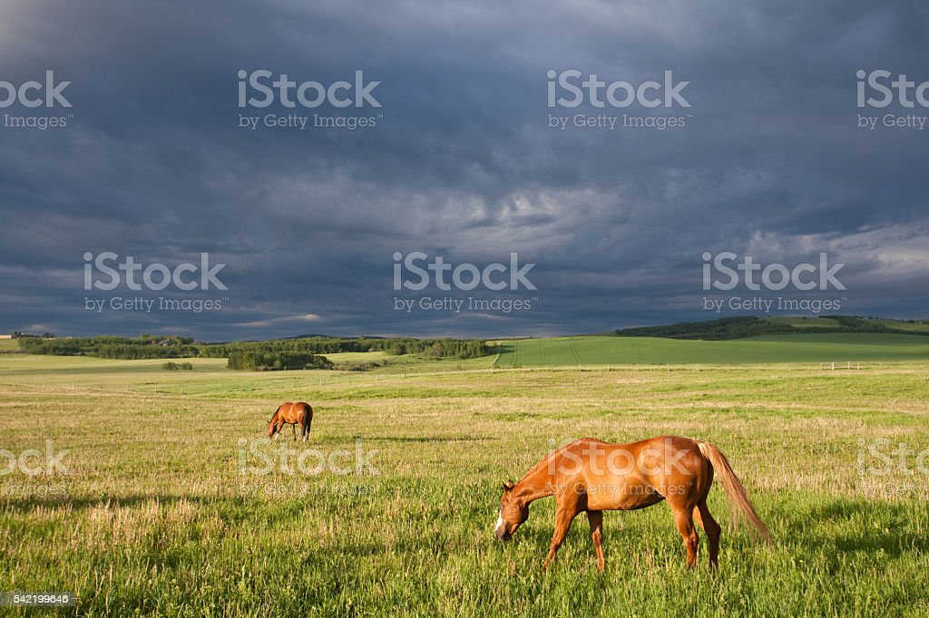 Two Horses Graizing on the Great Plains With Storm stock photo