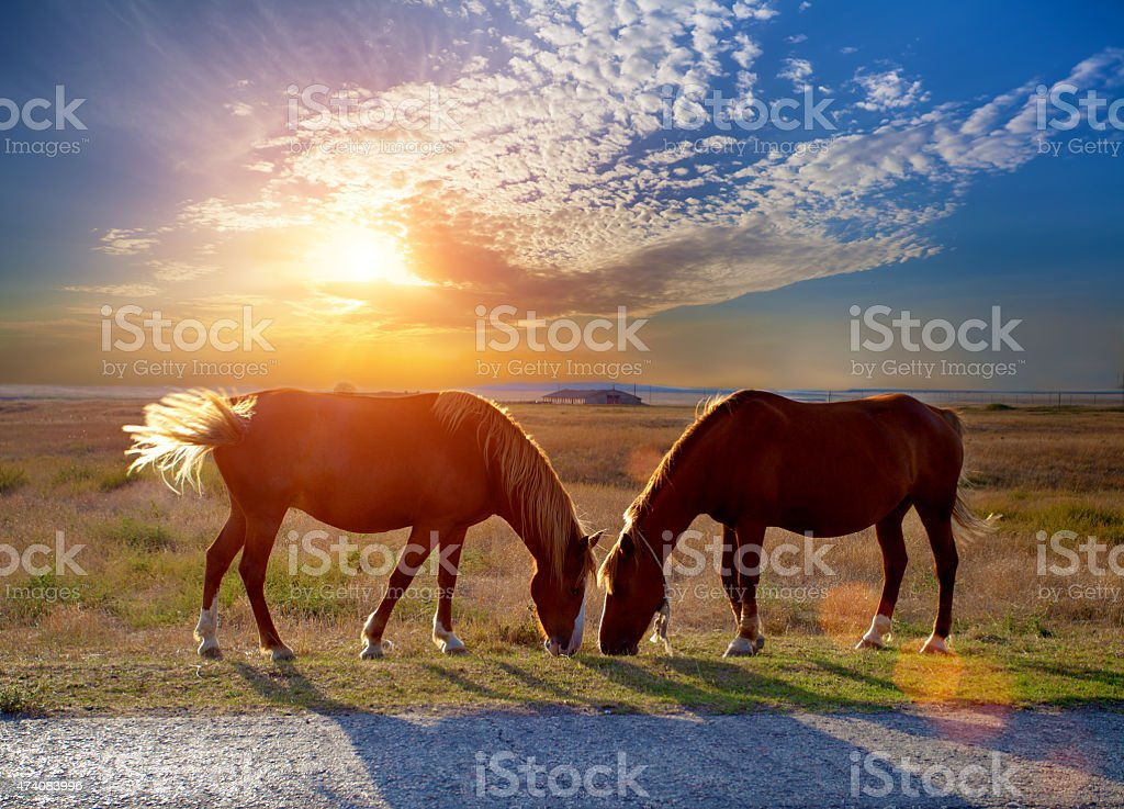 Two horses grazing in a meadow at sunset stock photo