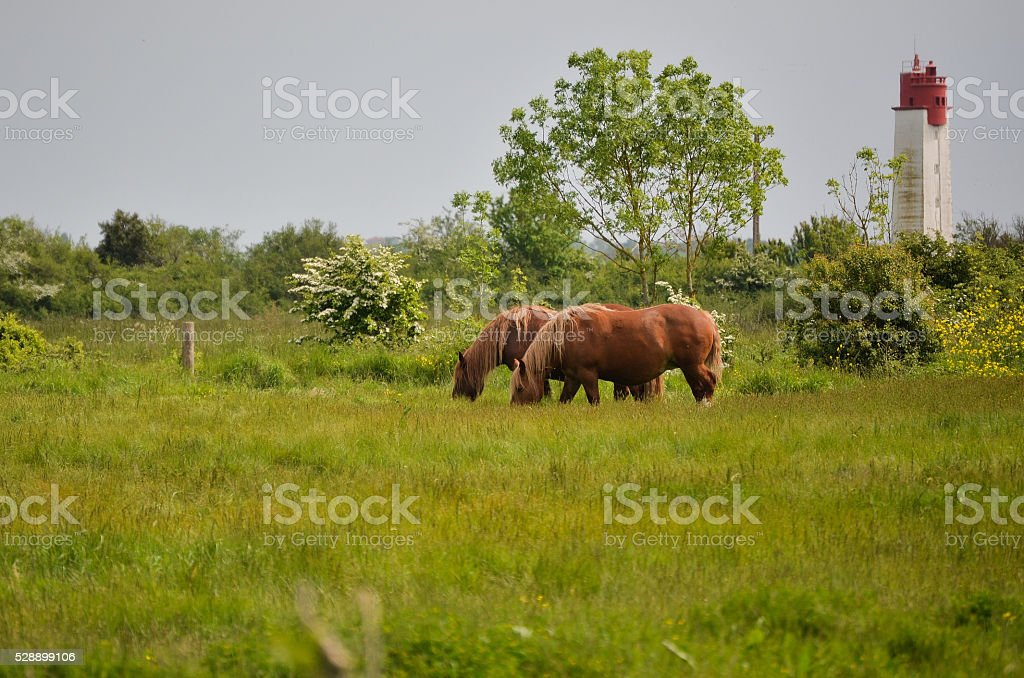Two horses in a meadow, above the seaside in France royalty-free stock photo