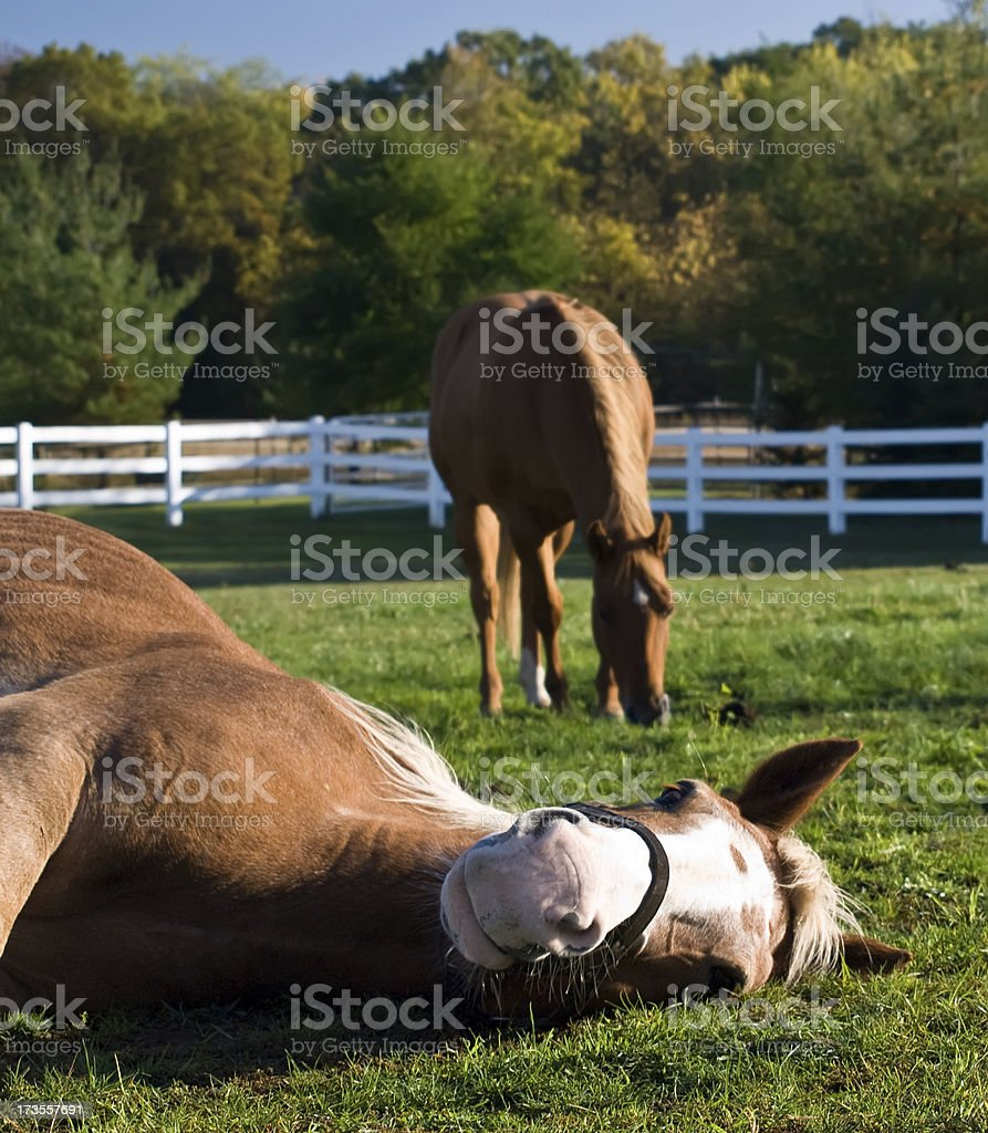 Two Horses in a Pasture royalty-free stock photo