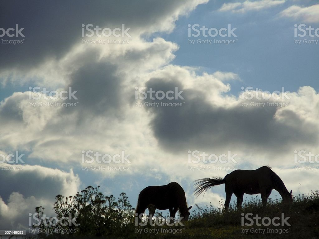 Two Horses in the early afternoon stock photo