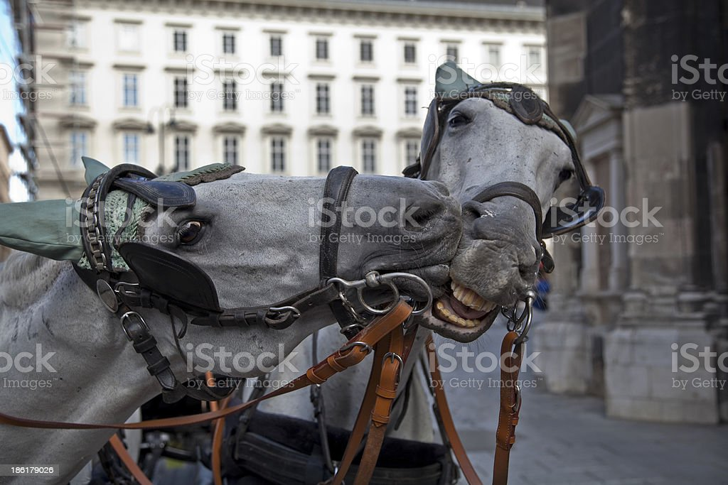 two horses  love in Vienna stock photo