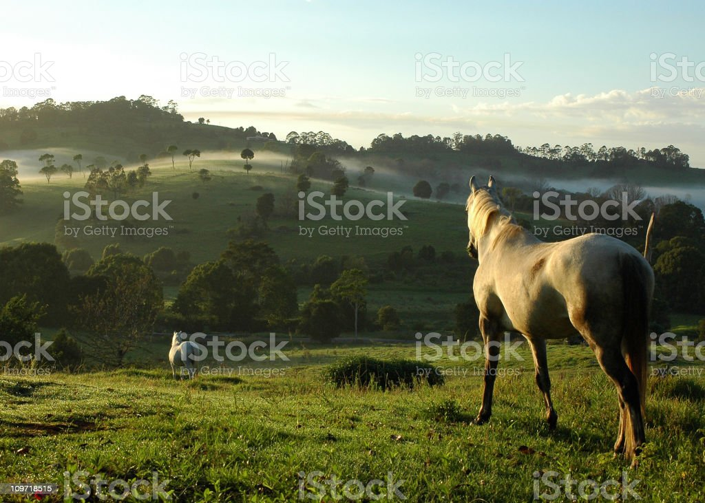 two horses mist royalty-free stock photo