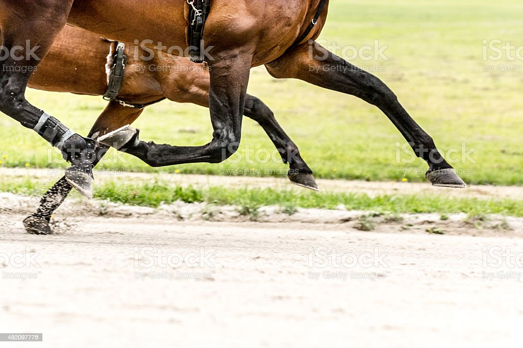 Two horses on harness racing competition trotting aligned stock photo