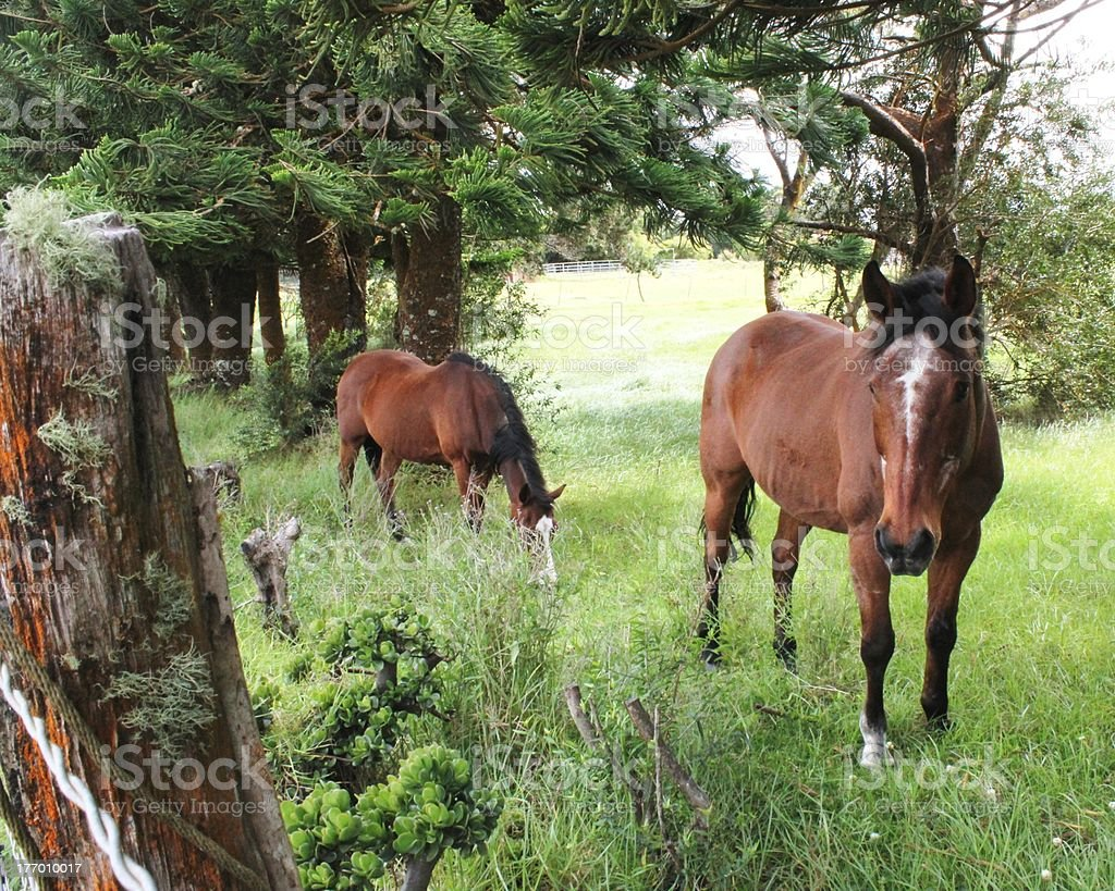 two horses on ranch stock photo