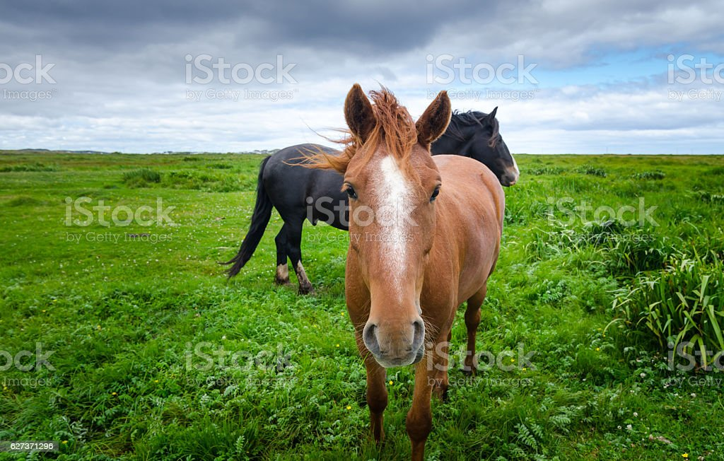 Two horses outside in a pasture meadow. stock photo