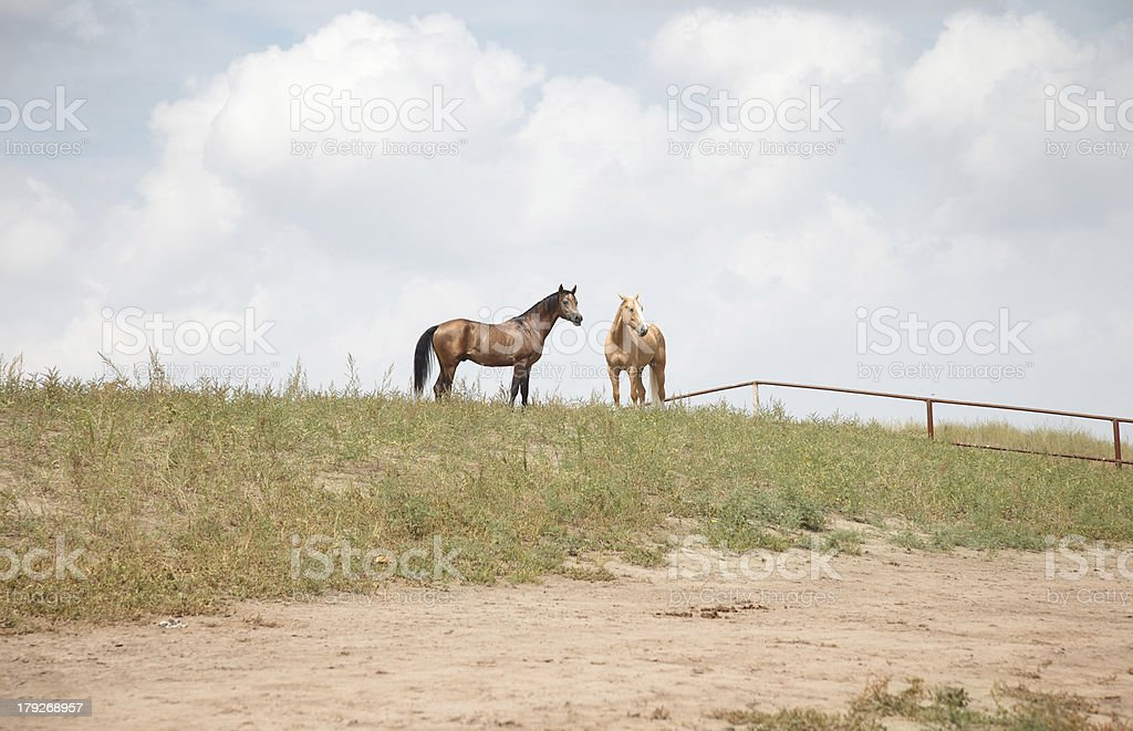 Two horses royalty-free stock photo