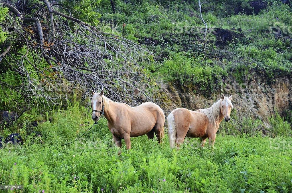 Две лошадей Стоковые фото Стоковая фотография