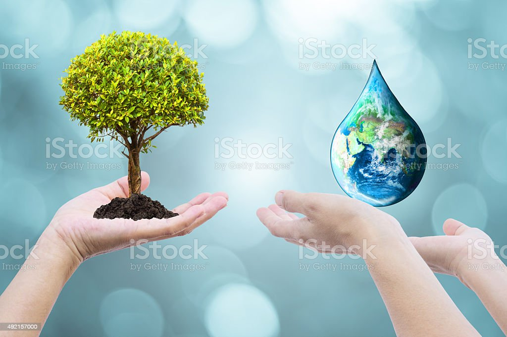 Two human hands with tree planting stock photo