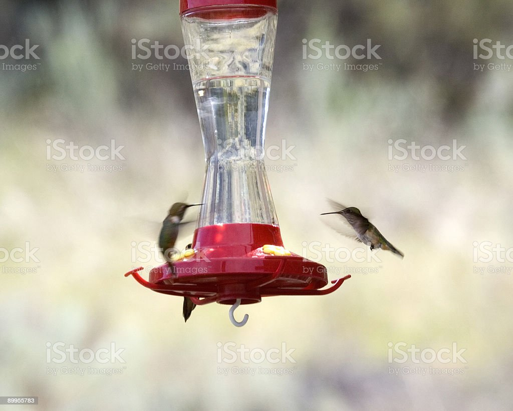 two hummingbirds at the feeder royalty-free stock photo