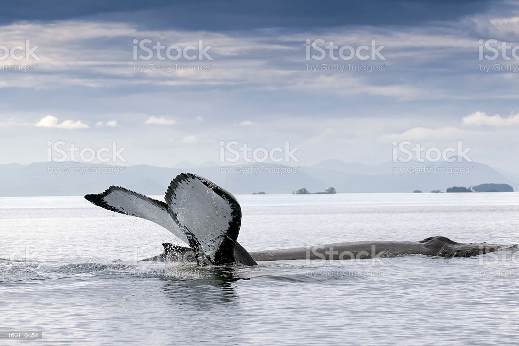 Two Humpback Whales in Alaska Frederick Sound stock photo