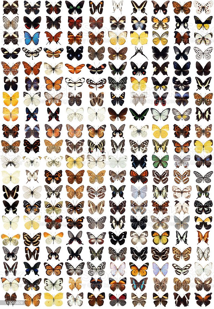 Two hundred different butterflies stock photo