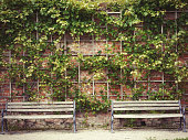 Two identical benches against the background of a stone wall