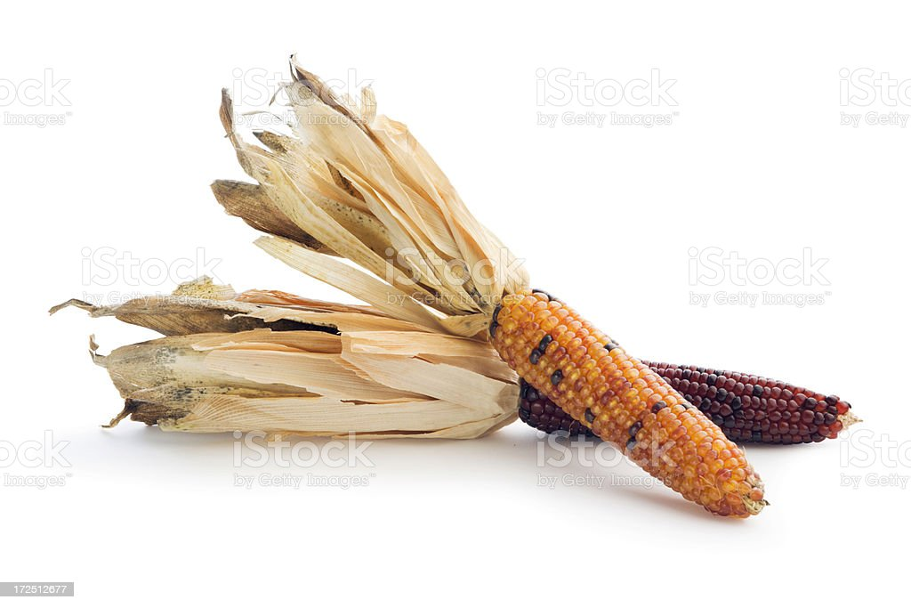 Two Indian Corns Isolated stock photo